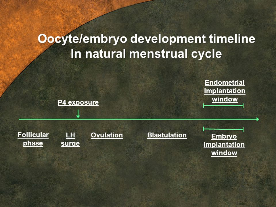 Oocyte/embryo development timeline In natural menstrual cycle