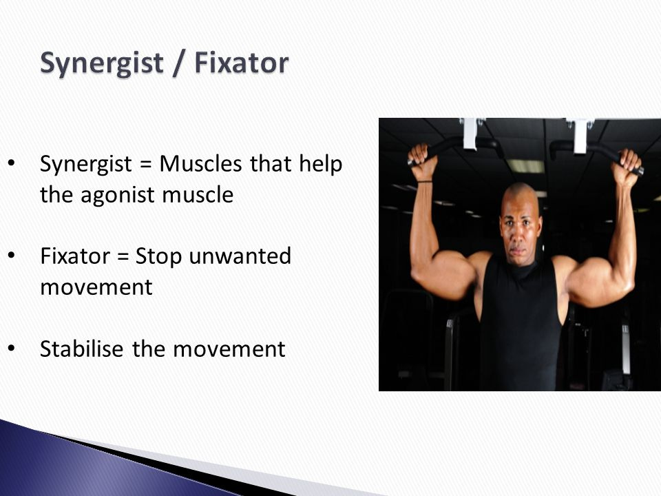 Synergist / Fixator Synergist = Muscles that help the agonist muscle