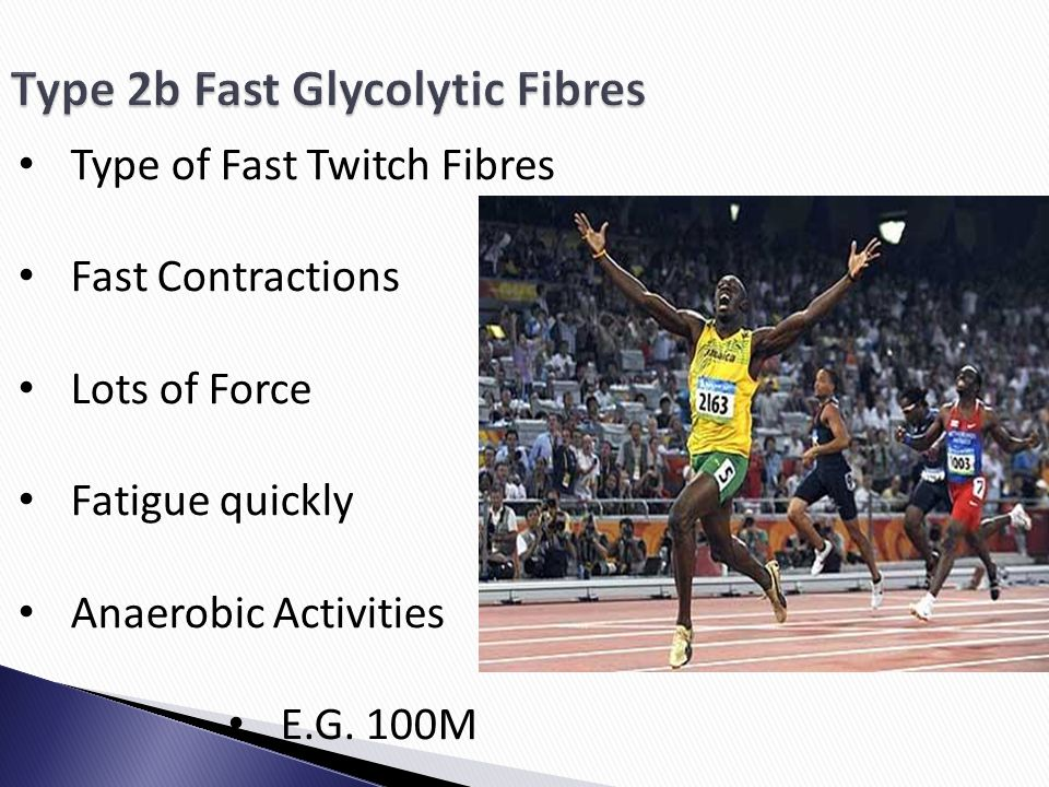 Type 2b Fast Glycolytic Fibres