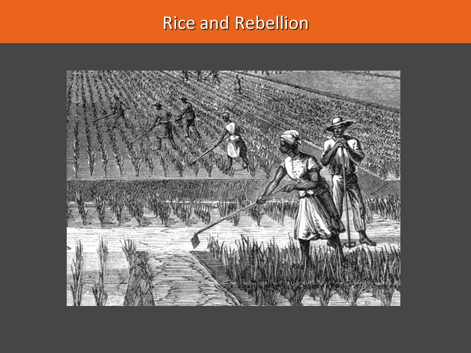 Rice and Rebellion