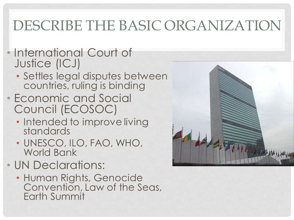 Describe the basic Organization