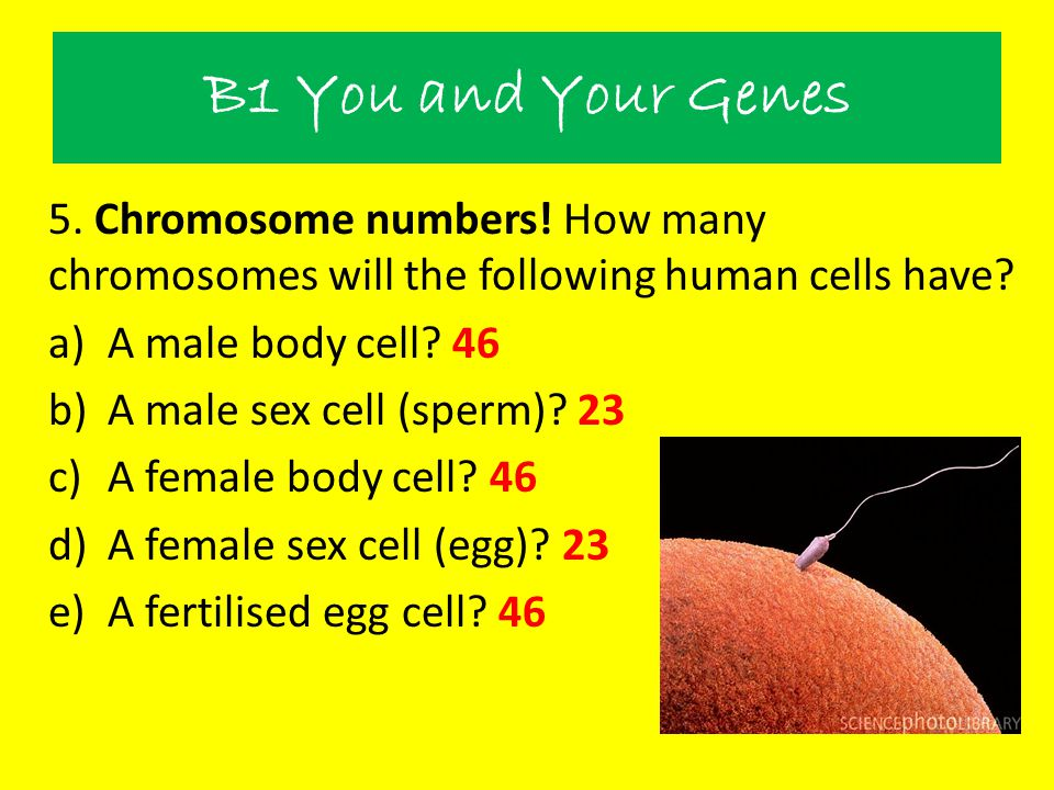 B1 You and Your Genes 5. Chromosome numbers! How many chromosomes will the following human cells have