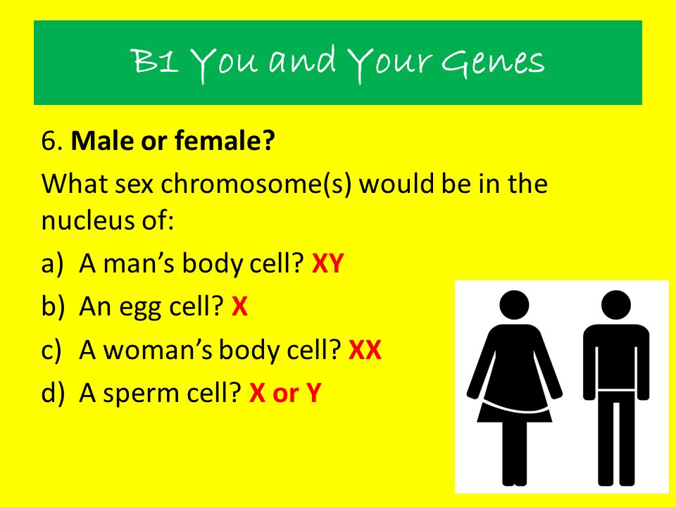 B1 You and Your Genes 6. Male or female