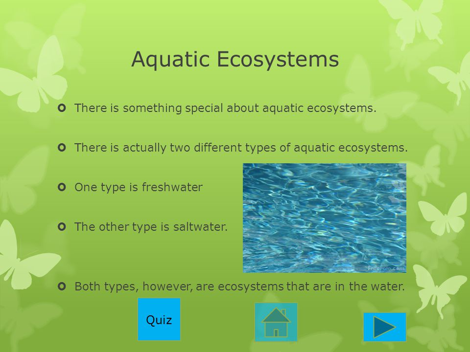 Aquatic Ecosystems Quiz