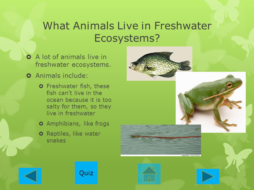 What Animals Live in Freshwater Ecosystems