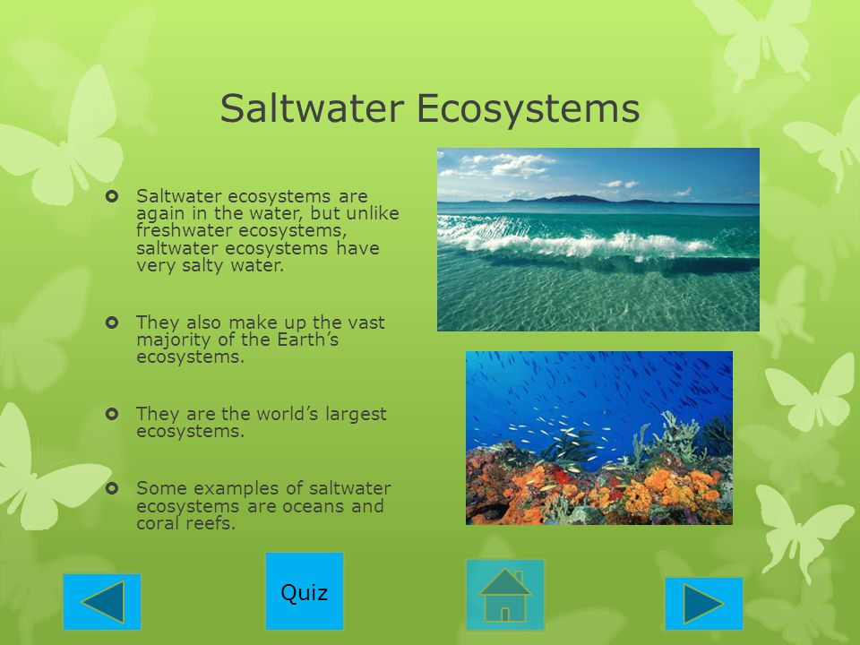 Saltwater Ecosystems Quiz