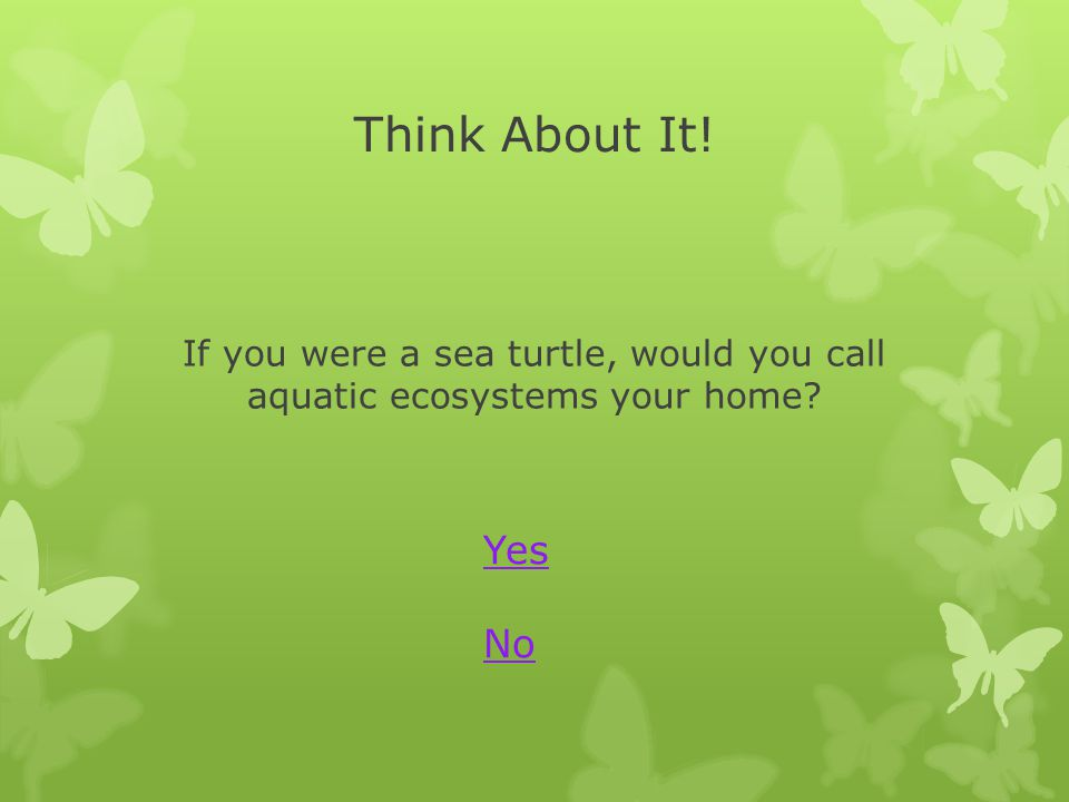 If you were a sea turtle, would you call aquatic ecosystems your home