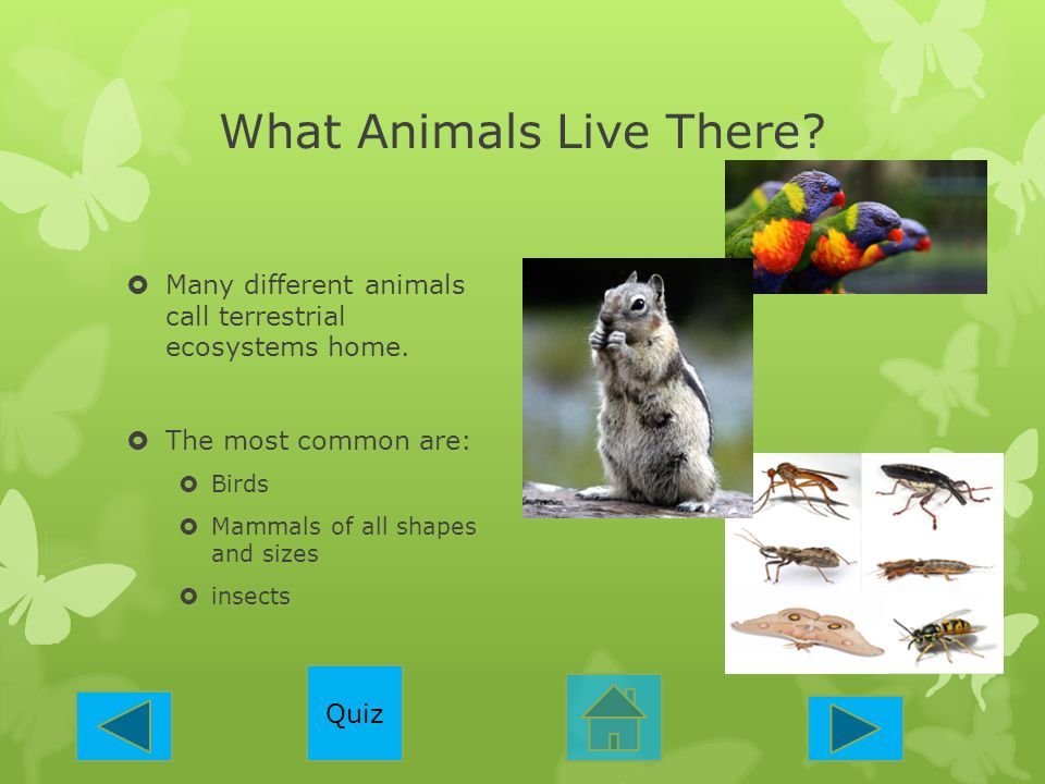 What Animals Live There