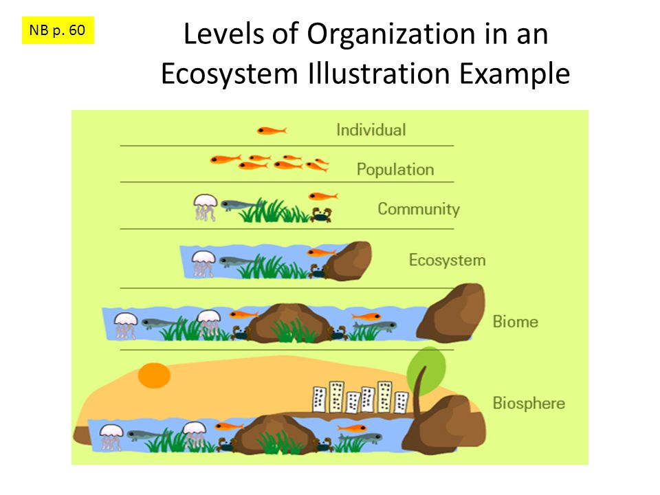 Levels of Organization in an Ecosystem Illustration Example