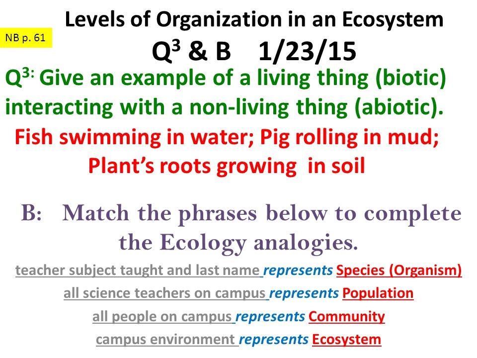 B: Match the phrases below to complete the Ecology analogies.