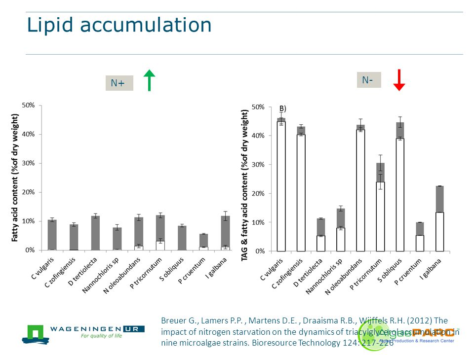 Algaeparc biorefinery ppt video online download 10 lipid accumulation ccuart Gallery