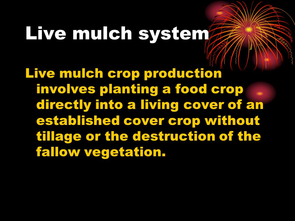 Live mulch system