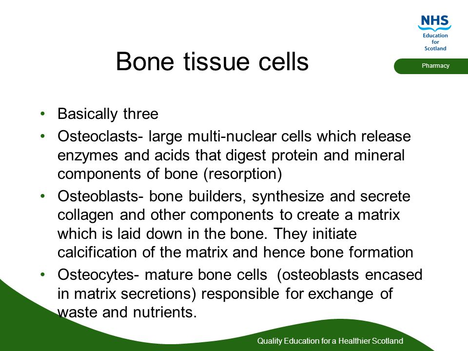 Bone tissue cells Basically three