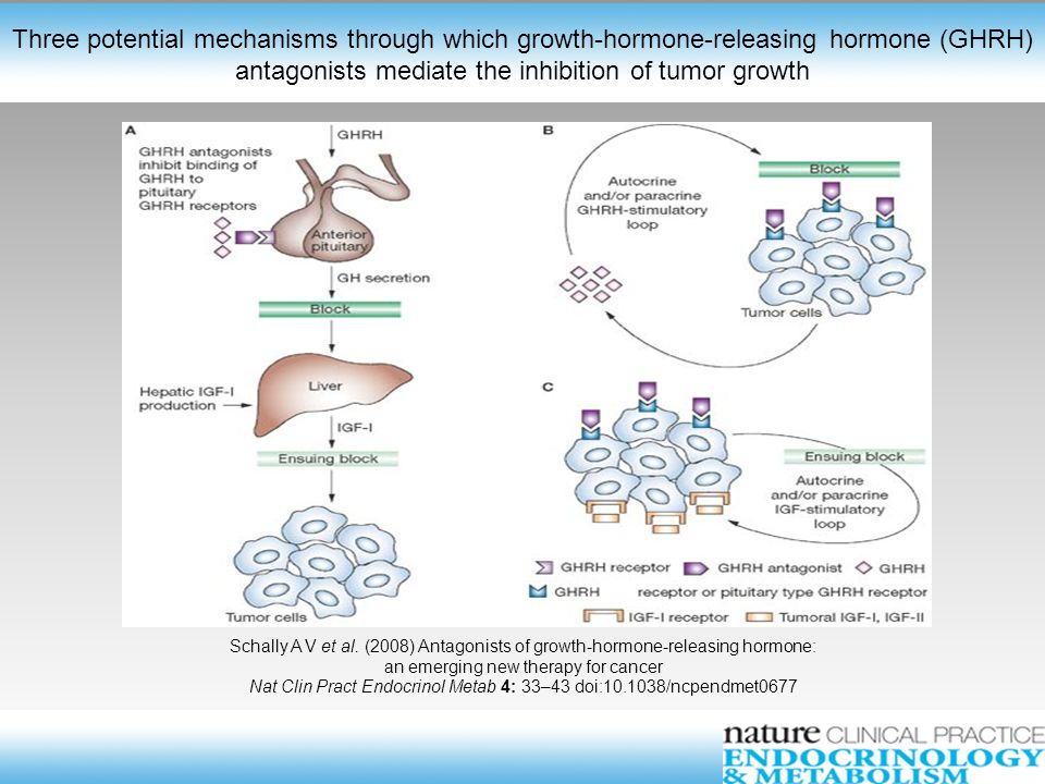Three potential mechanisms through which growth-hormone-releasing hormone (GHRH) antagonists mediate the inhibition of tumor growth