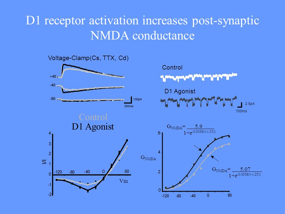 D1 receptor activation increases post-synaptic NMDA conductance
