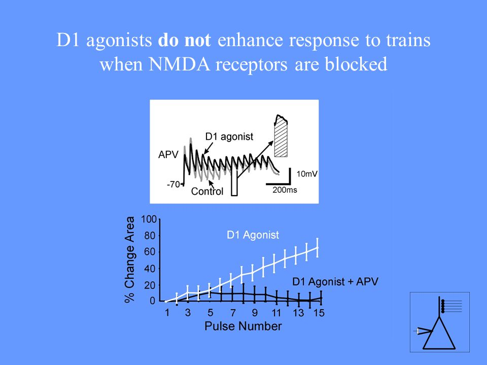 D1 agonists do not enhance response to trains when NMDA receptors are blocked