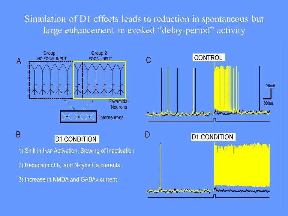 Simulation of D1 effects leads to reduction in spontaneous but large enhancement in evoked delay-period activity