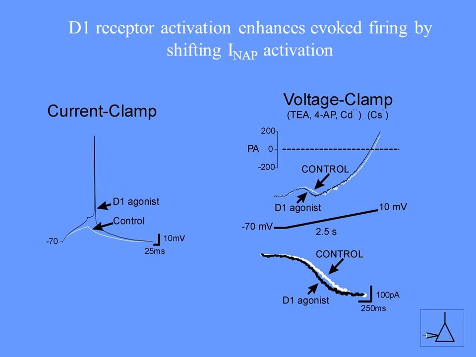 D1 receptor activation enhances evoked firing by shifting INAP activation