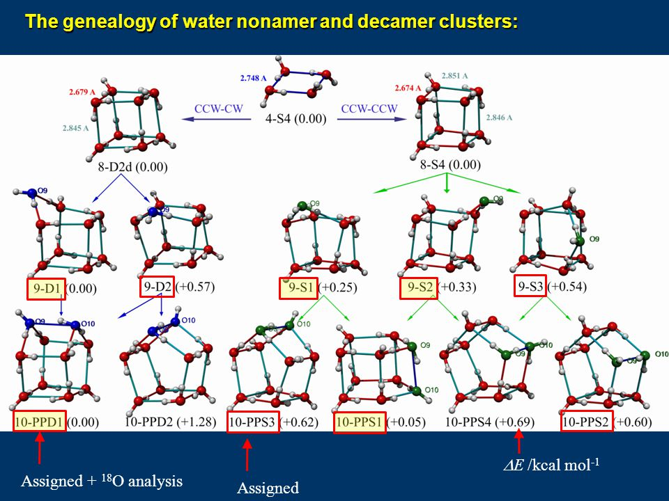 The genealogy of water nonamer and decamer clusters:
