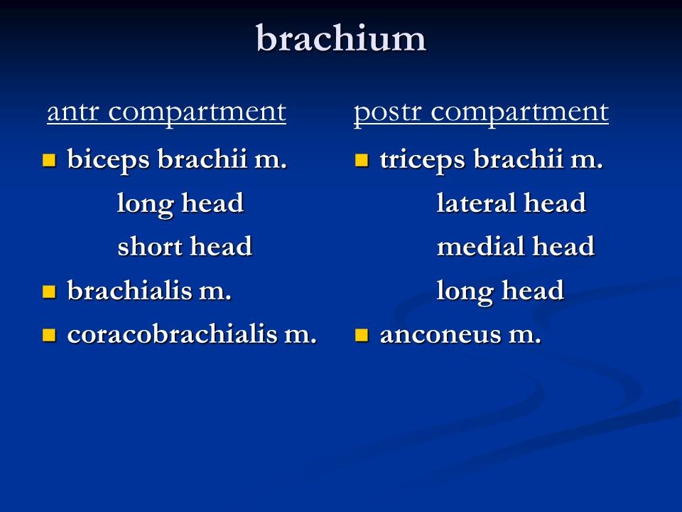 brachium antr compartment postr compartment biceps brachii m.