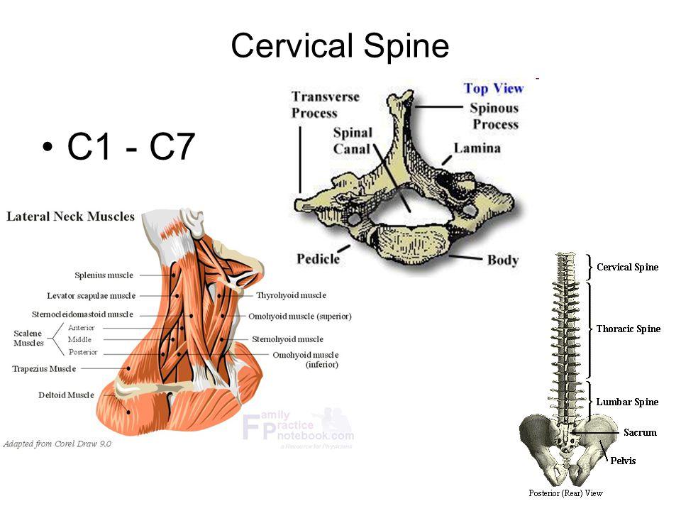 Cervical Spine Ppt Video Online Download