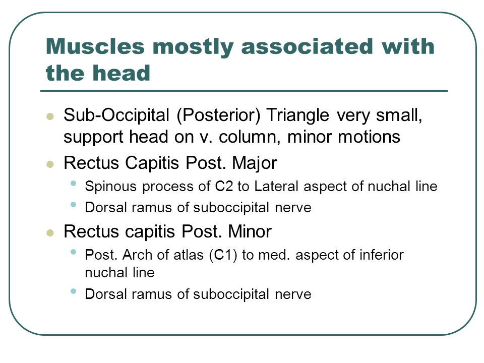 Muscles mostly associated with the head