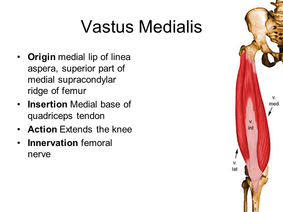 Vastus Medialis Origin medial lip of linea aspera, superior part of medial supracondylar ridge of femur.