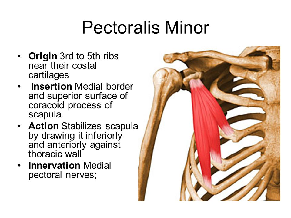 Pectoralis Minor Origin 3rd to 5th ribs near their costal cartilages