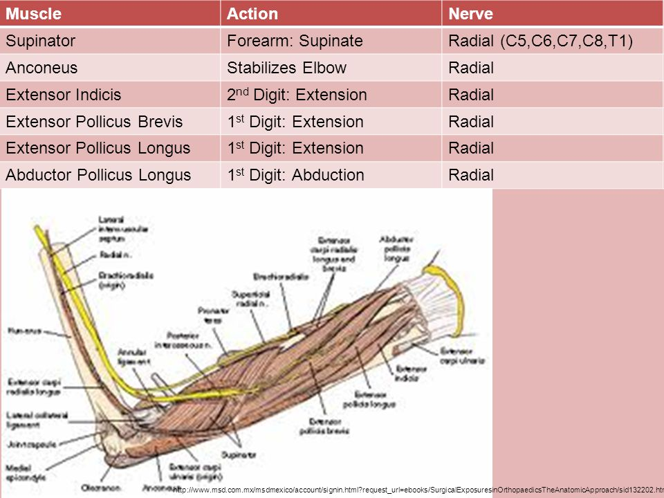 Anatomy Ppt Video Online Download
