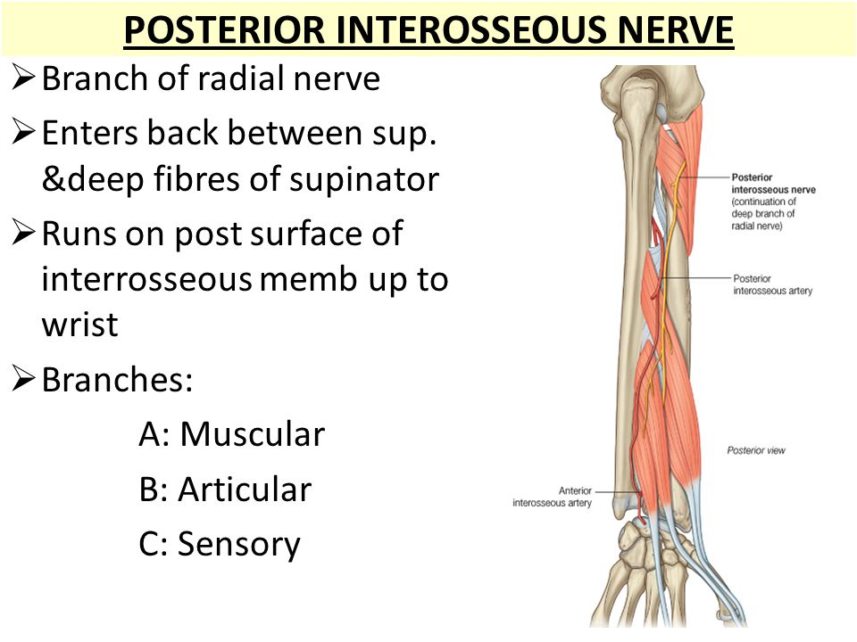Posterior Compartment Ppt Video Online Download