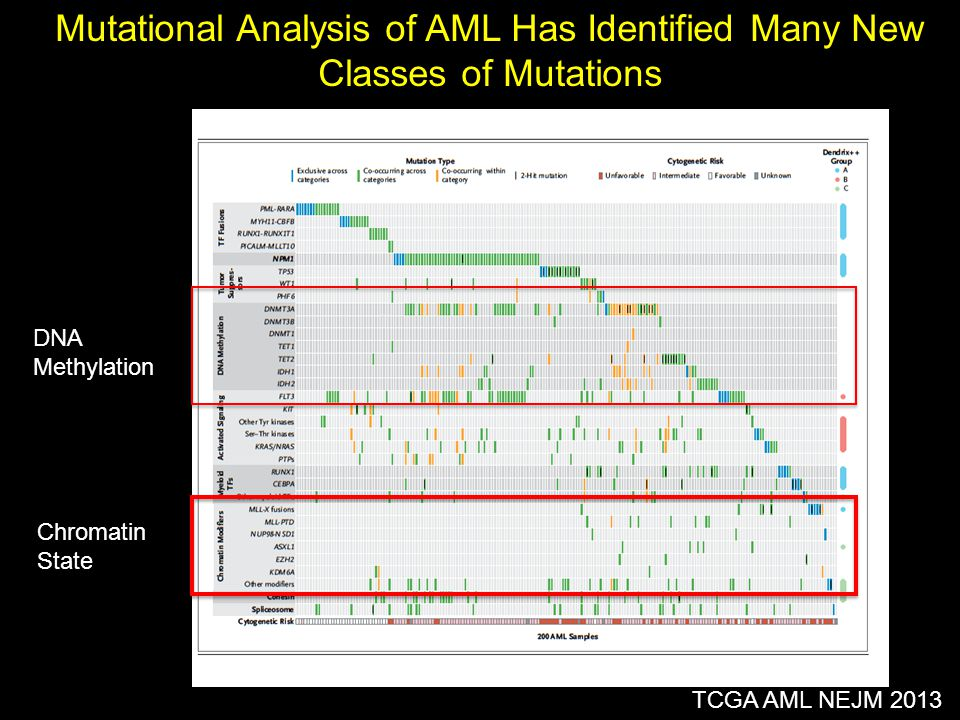Mutational Analysis of AML Has Identified Many New Classes of Mutations