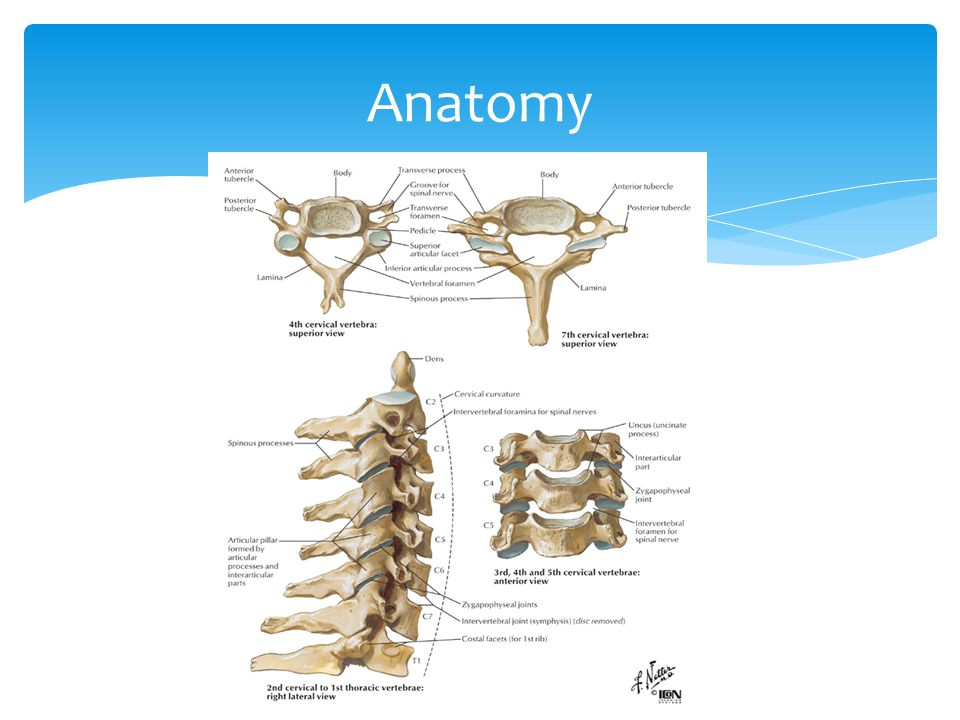 The cervical spine. Normal anatomy, variants and pathology. - ppt ...