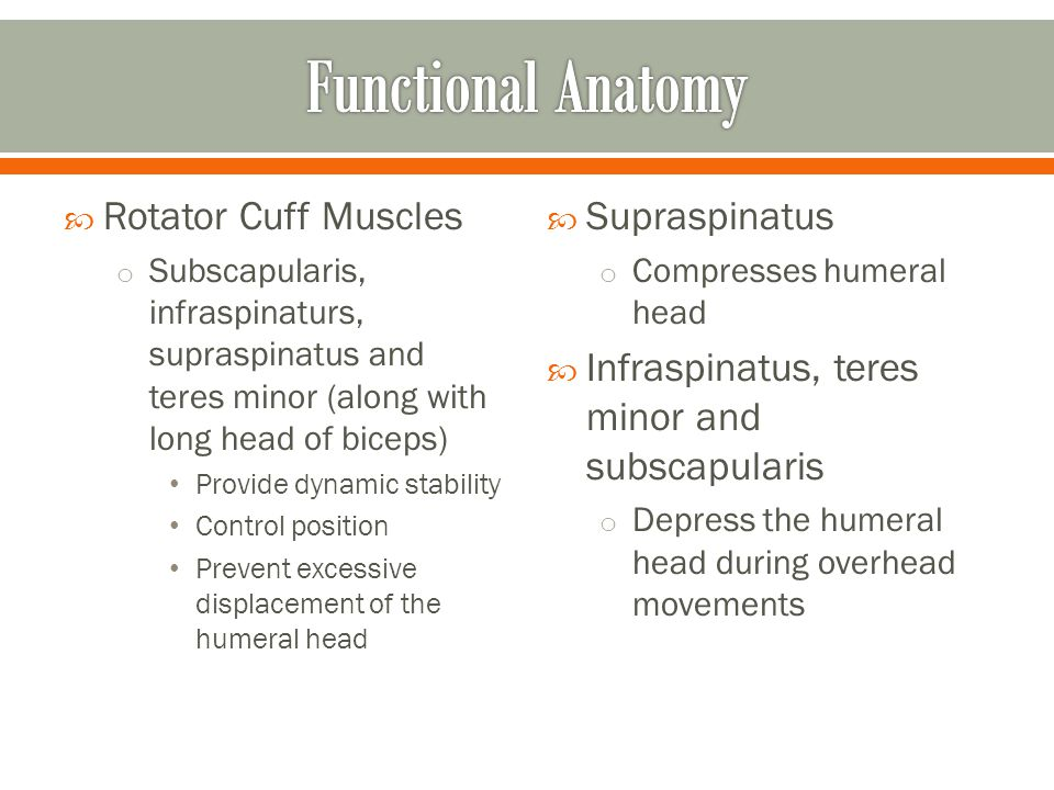 Functional Anatomy Rotator Cuff Muscles Supraspinatus