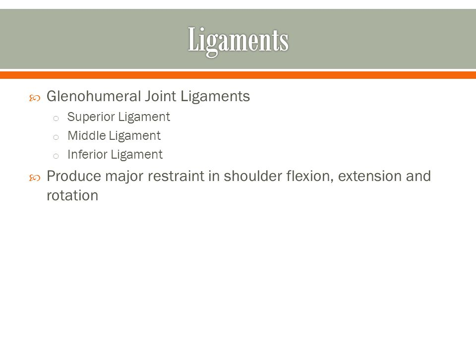Ligaments Glenohumeral Joint Ligaments