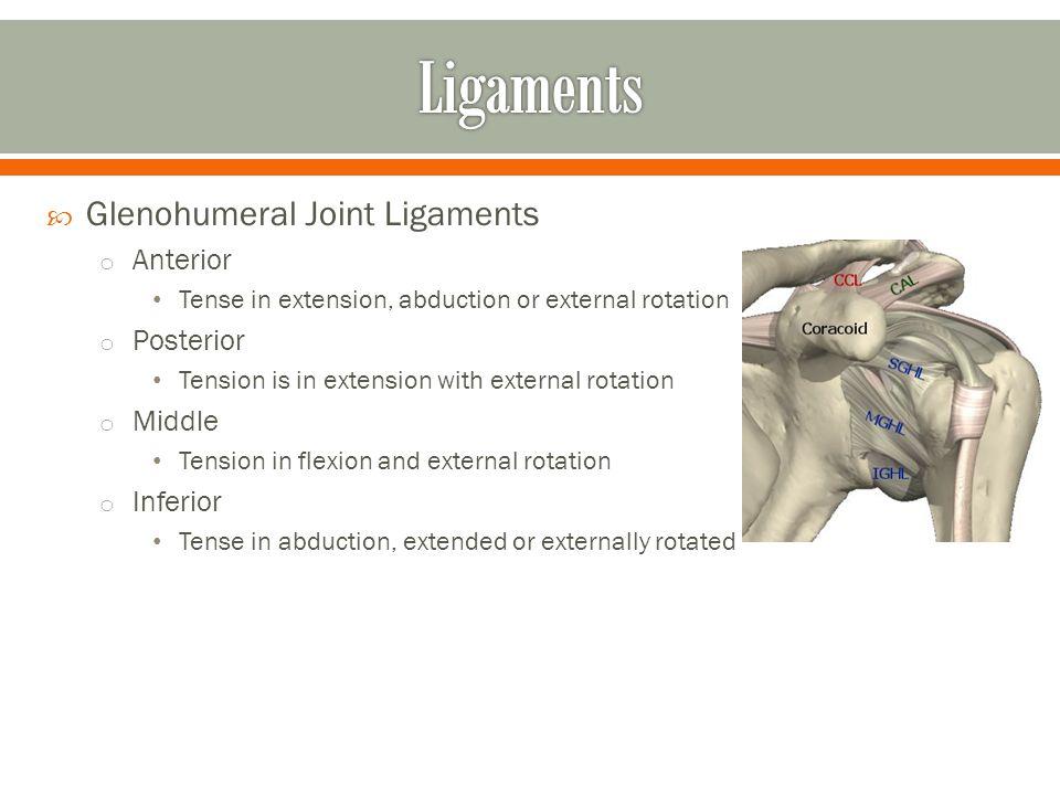 Anatomy of Shoulder Part 2 - ppt download