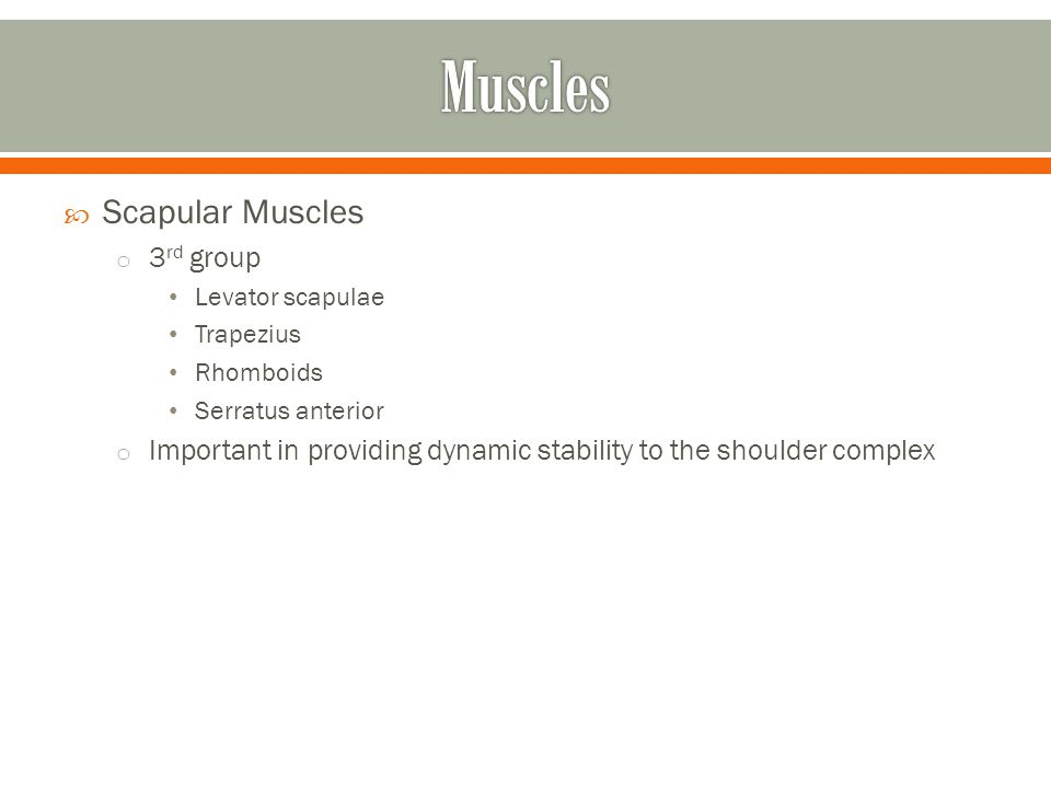 Muscles Scapular Muscles 3rd group