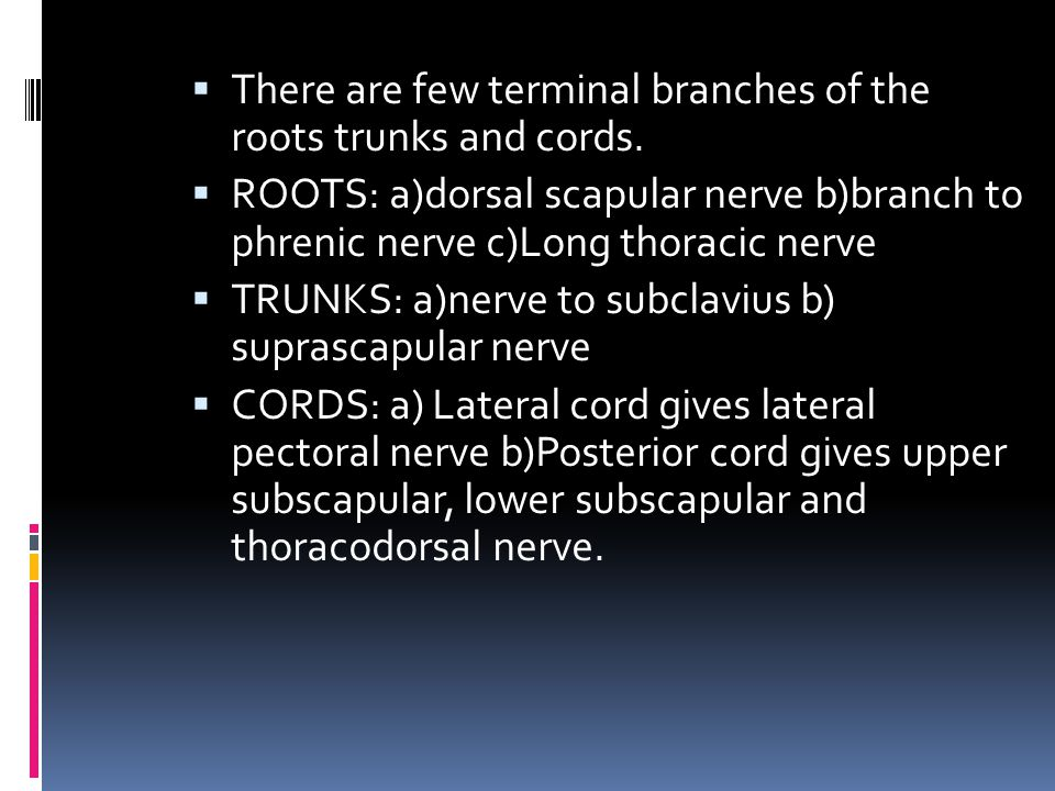 There are few terminal branches of the roots trunks and cords.