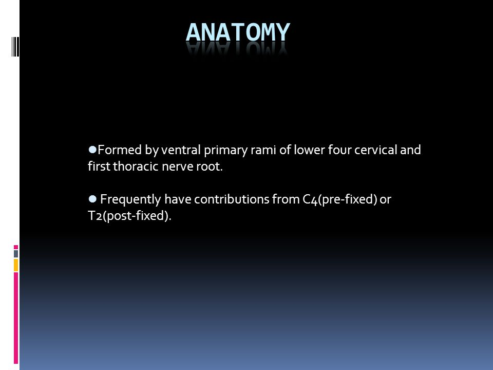 Anatomy Formed by ventral primary rami of lower four cervical and first thoracic nerve root.