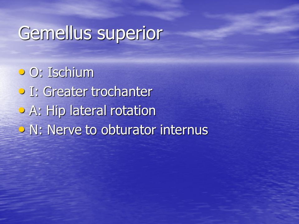 Gemellus superior O: Ischium I: Greater trochanter