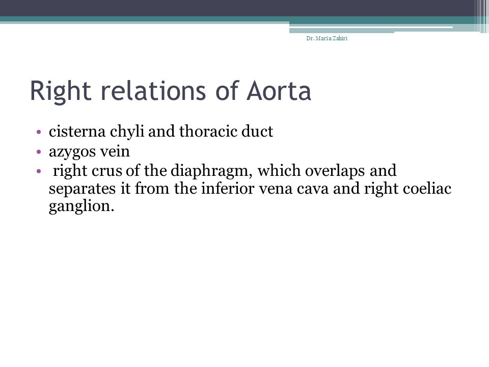 Right relations of Aorta