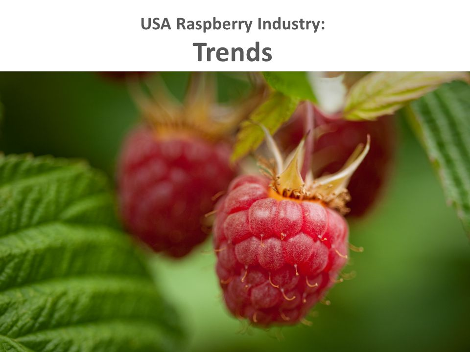USA Raspberry Industry: Trends
