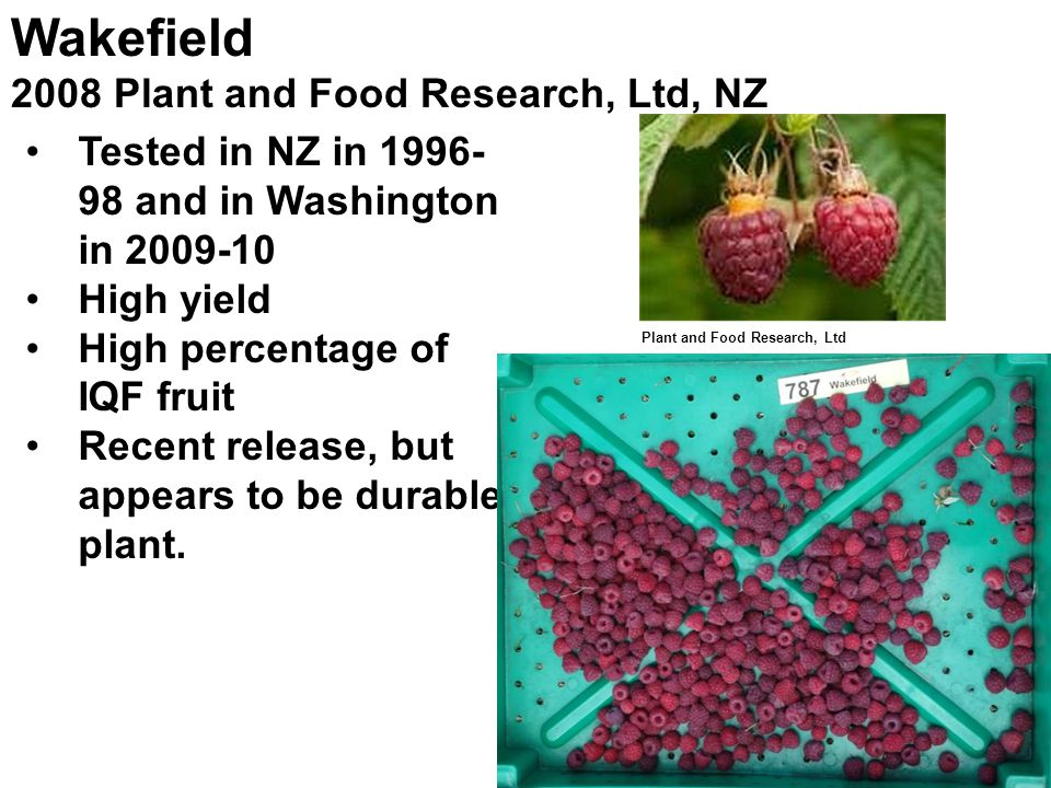 Wakefield 2008 Plant and Food Research, Ltd, NZ