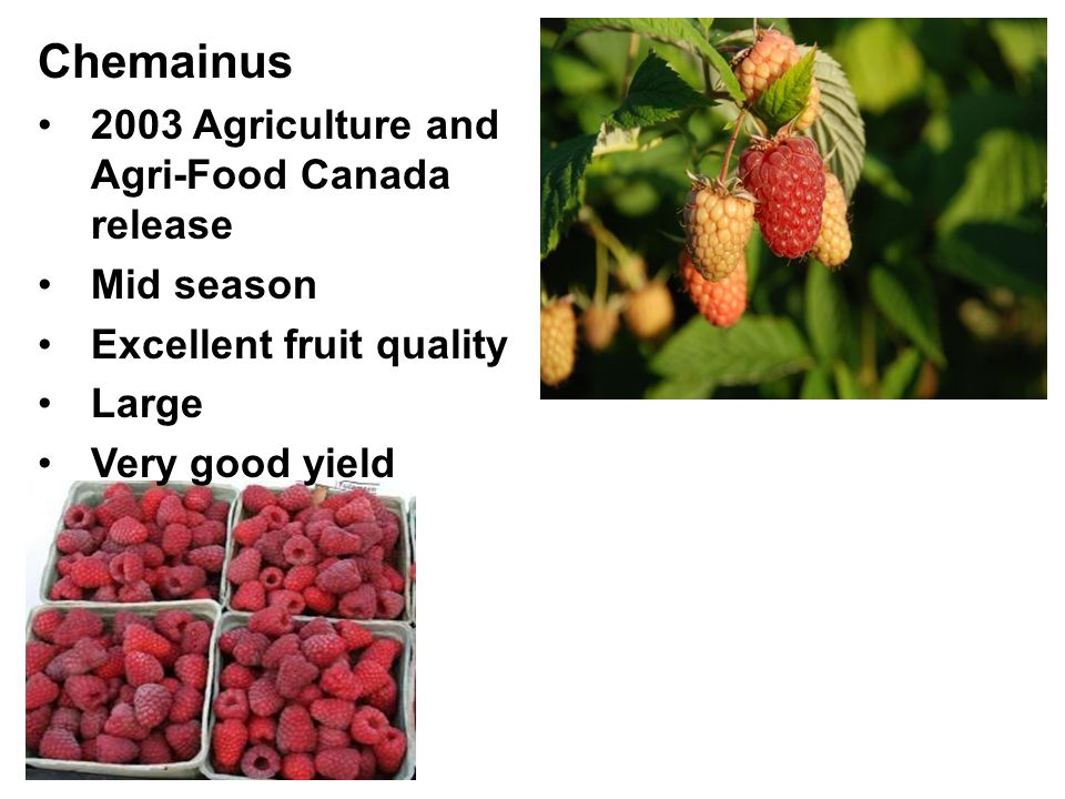 Chemainus 2003 Agriculture and Agri-Food Canada release Mid season