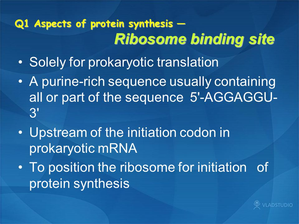 Q1 Aspects of protein synthesis — Ribosome binding site
