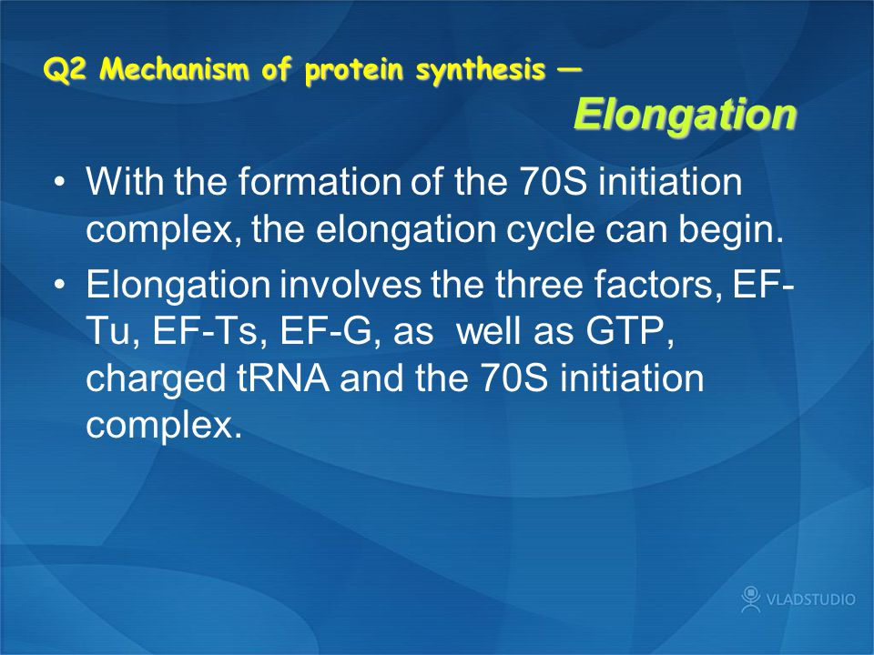 Q2 Mechanism of protein synthesis — Elongation