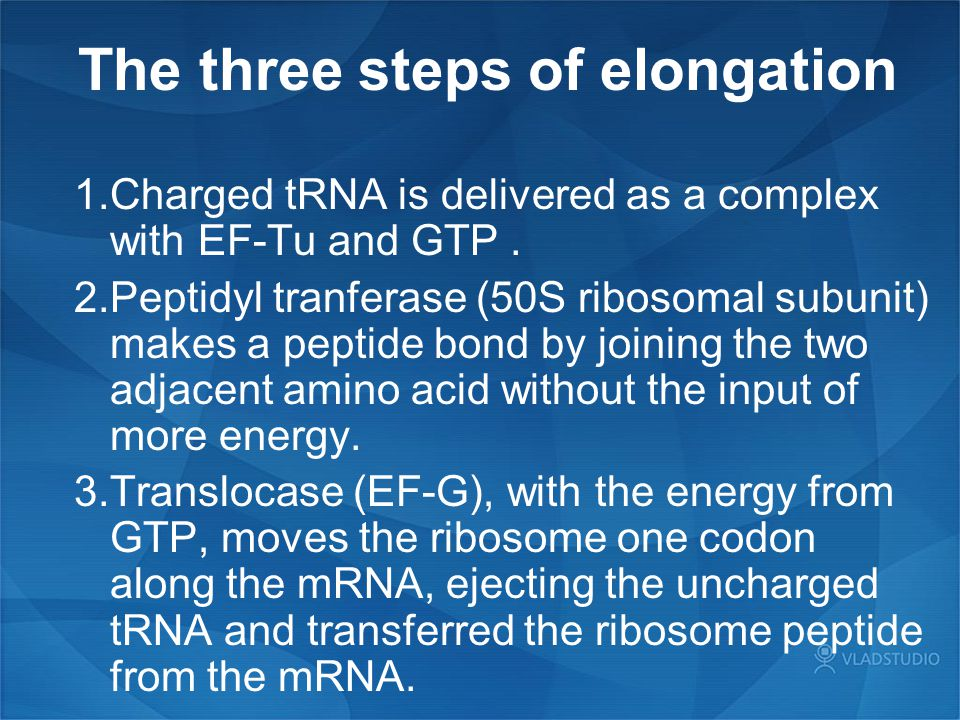 The three steps of elongation