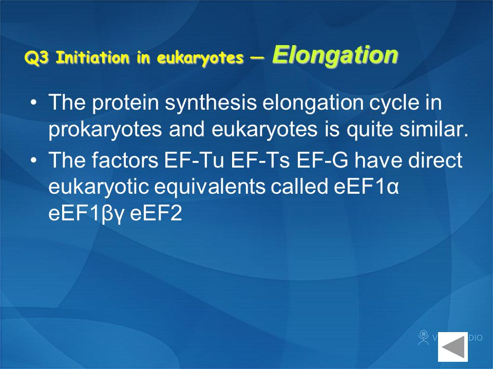 Q3 Initiation in eukaryotes — Elongation