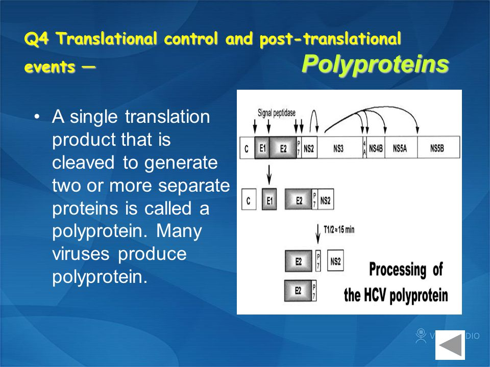 Q4 Translational control and post-translational events — Polyproteins