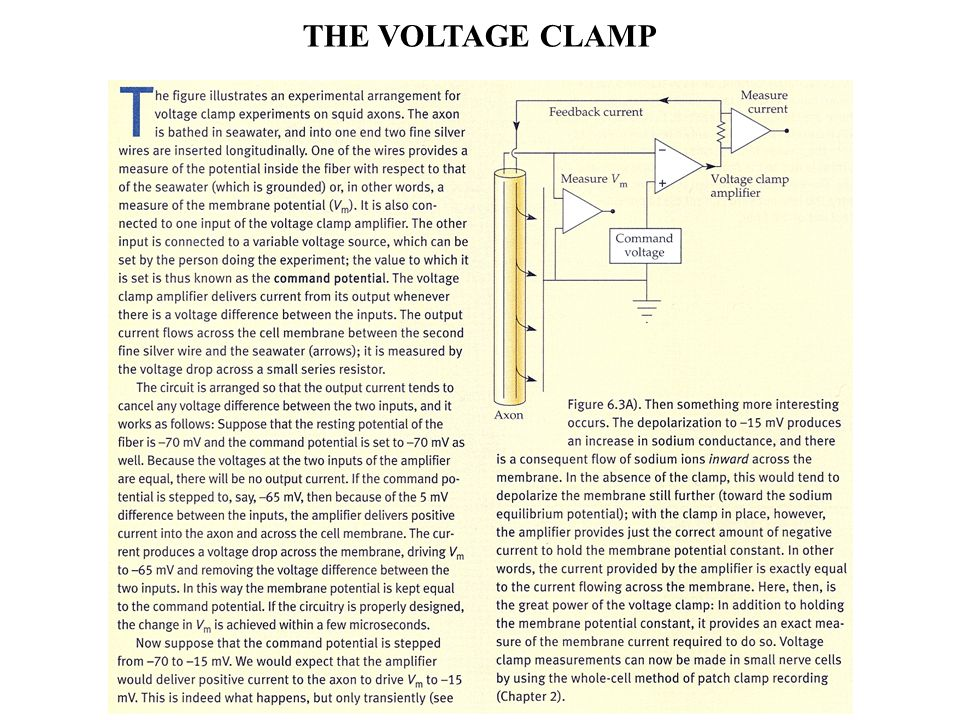 THE VOLTAGE CLAMP