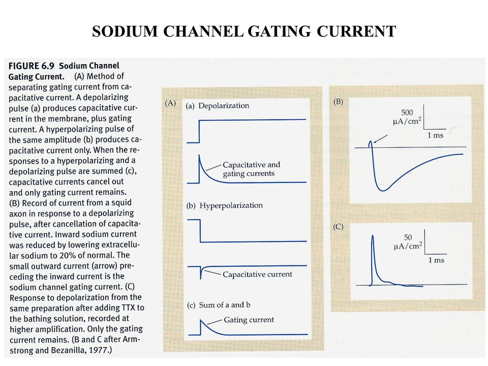SODIUM CHANNEL GATING CURRENT